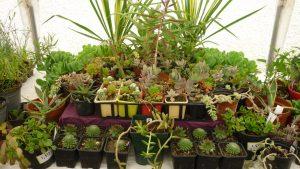 [:fr]Troc Plantes et Vide Grenier spécial outillage jardin[:] @ Mairie, Lascazères | Lascazères | Occitanie | France